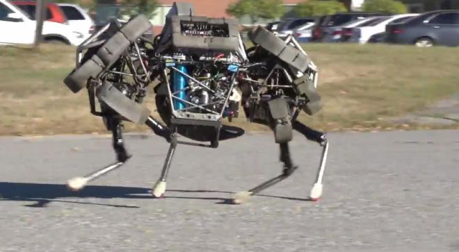 القط البري ، روبوت ، الروبوت
